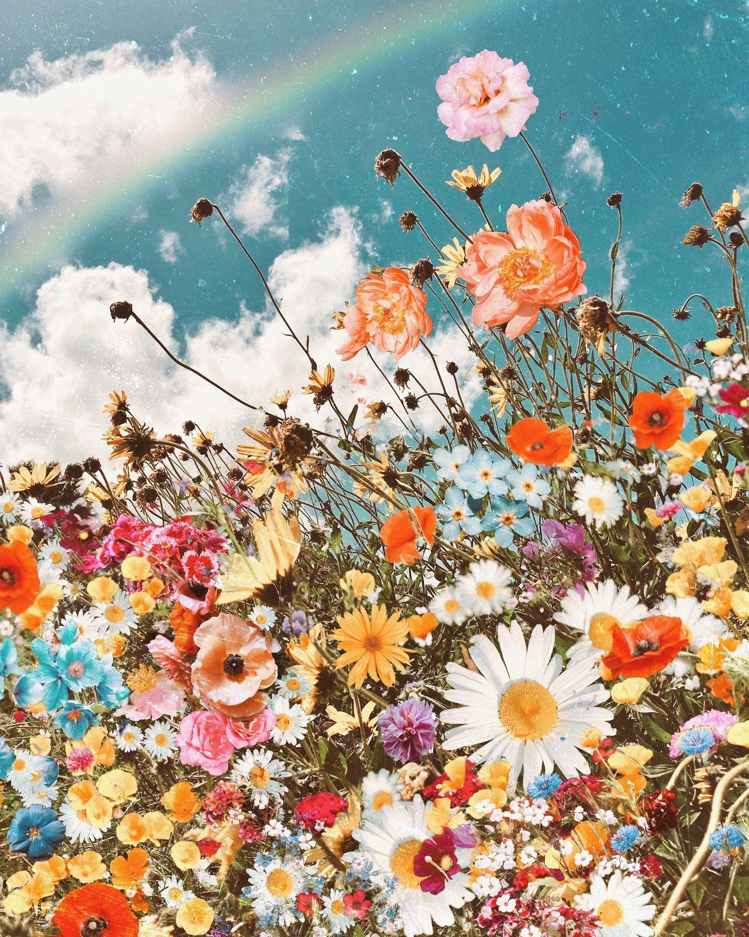 Oopsy Daisy Wallpaper nature flowers, Cute wallpaper
