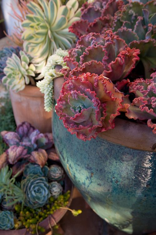 Lovely succulent pot
