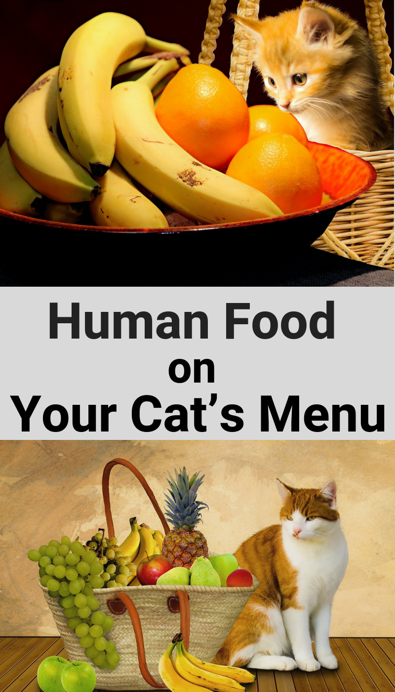 Human Food On Your Cat S Menu What Is Healthy For Your Cat Human Food Human Food For Cats Kitten Food