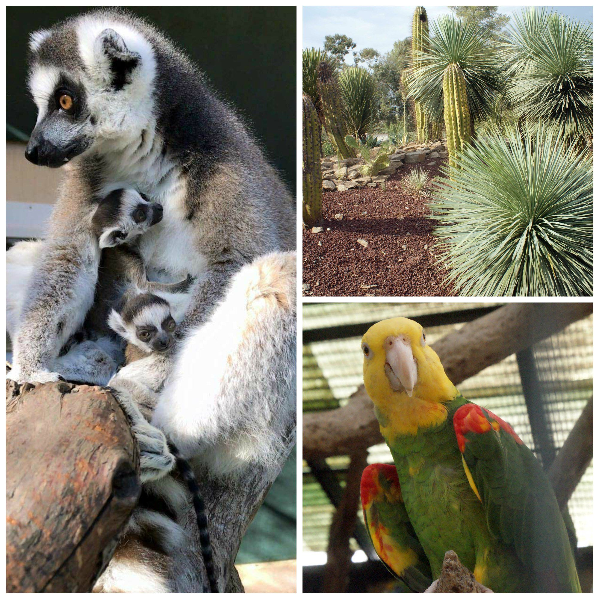 Notre Escapade Au Jardin Zoologique Tropical De La Londe Les