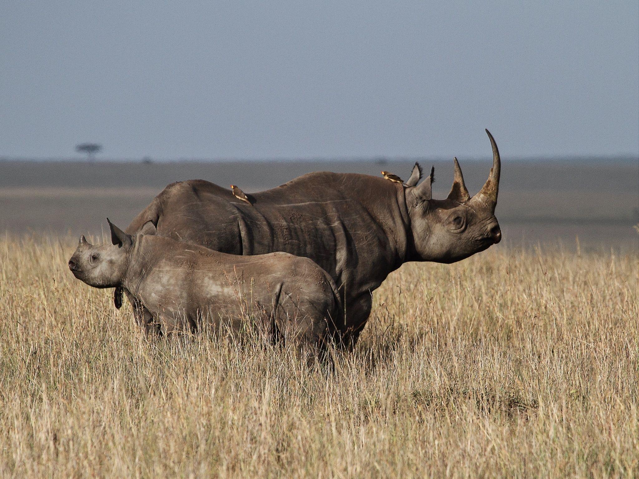 Фотография Hope for black rhino !!! автор Libor Ploček на 500px