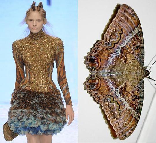 Moth dress by Alexander McQueen