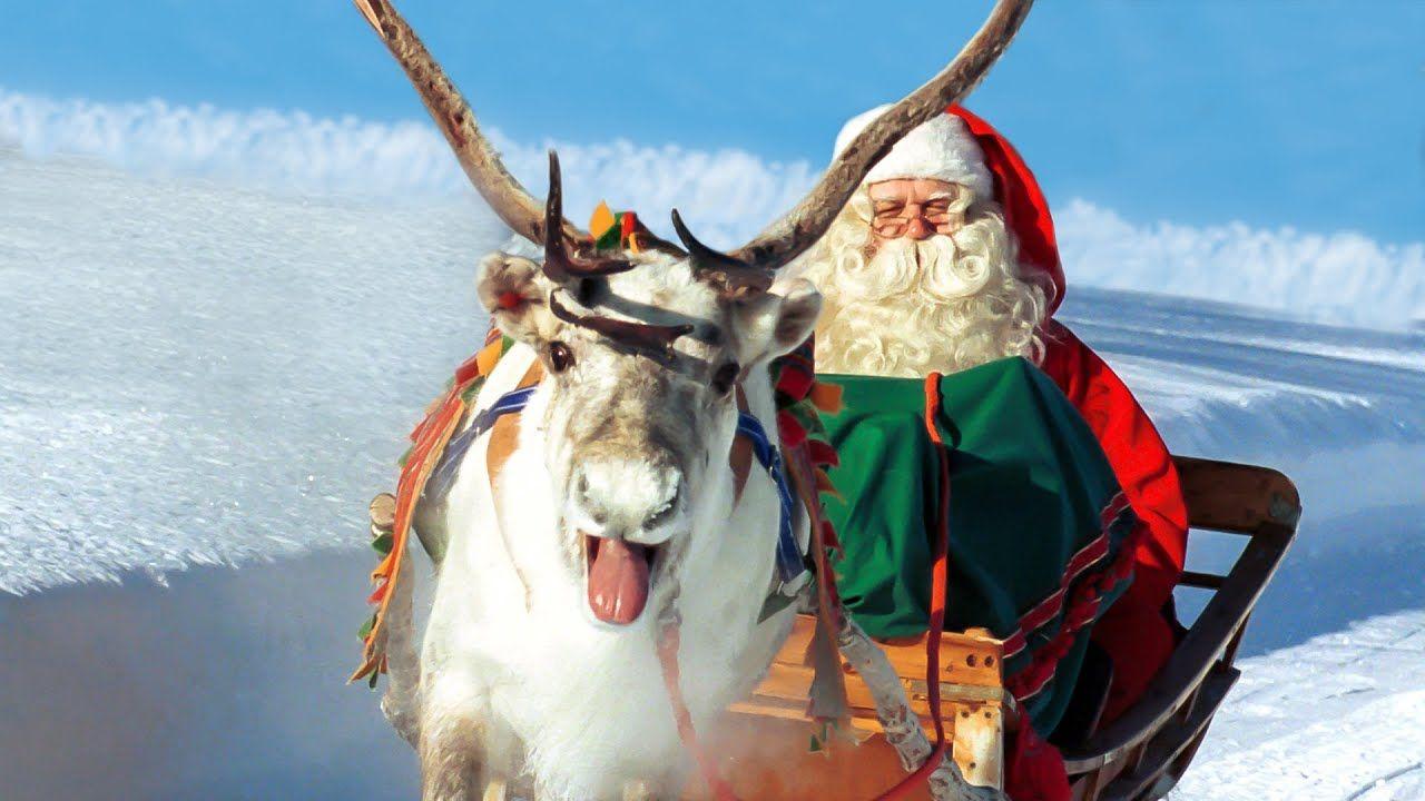 Babbo Natale Video Per Bambini.Renne Di Babbo Natale In Lapponia Finlandia Rovaniemi Video Per