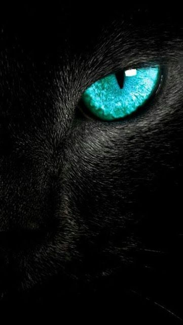 Wildlife 10+ Edited Wallpapers For Mobile Iphone Walls Home&Lock Screen