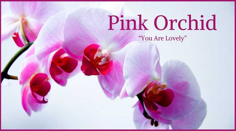 10 best funeral flowers funeral flowers pink orchids and flower pink orchids which mean grace innocence or femininity are a great choice for mothers grandmothers aunts and girls loveliveson mightylinksfo