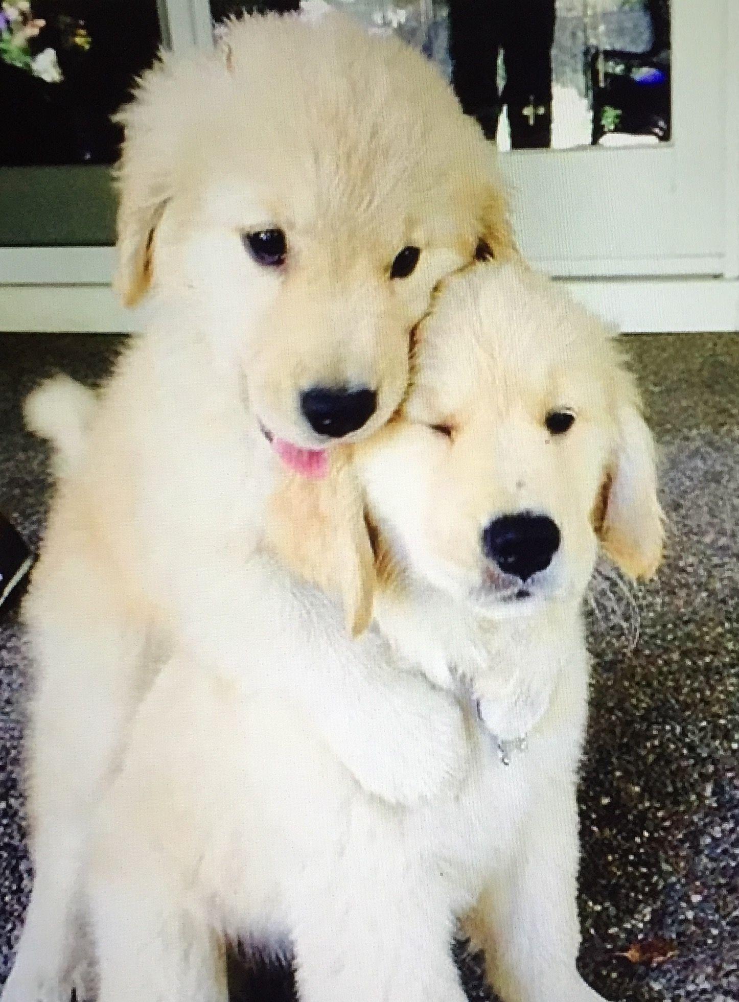 Si Cute Frases Pinterest Amor Perruno Tiernas Y Perruno