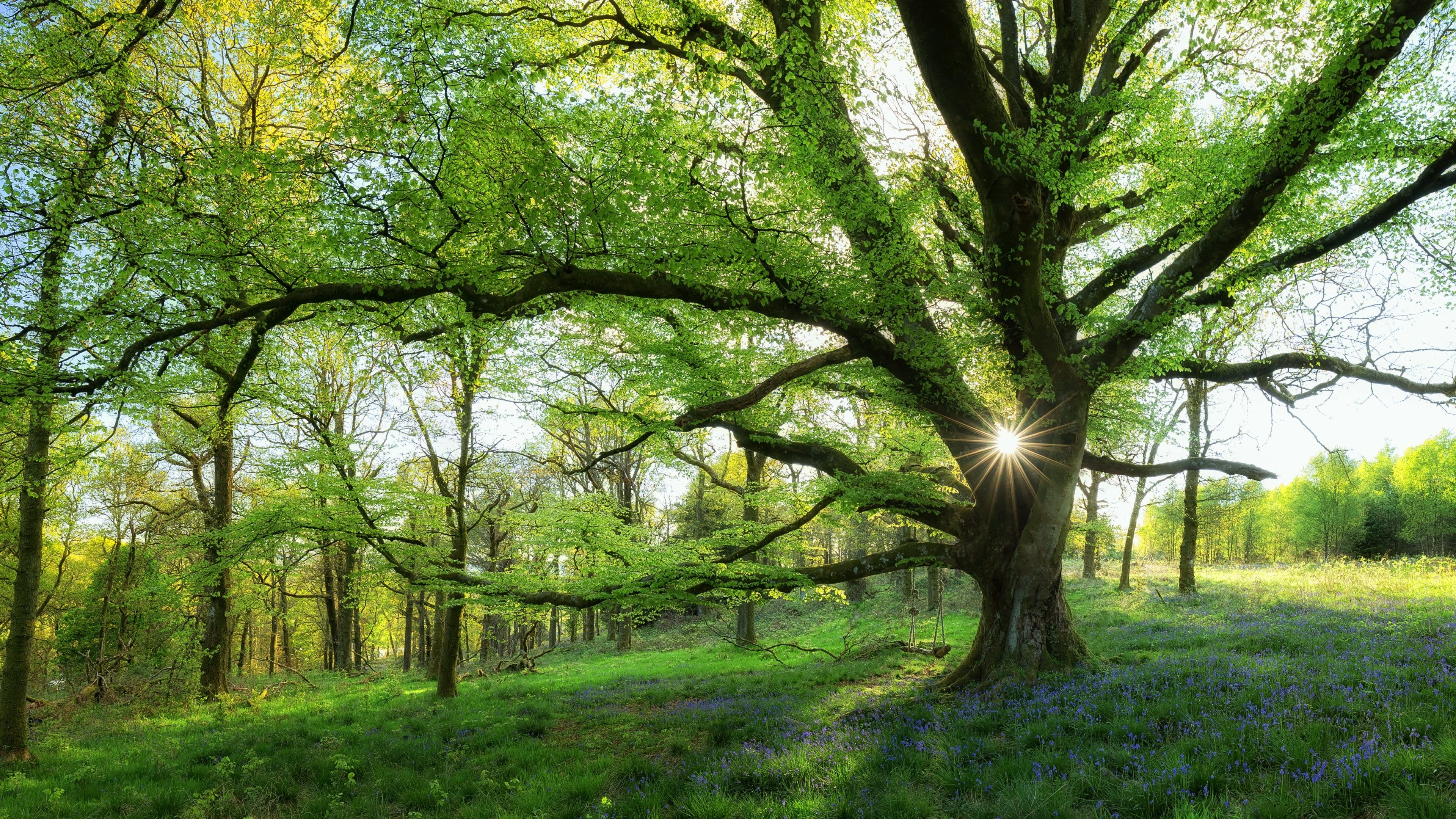 Tree Woodland Nature Forest Branch Old Growth Forest Riparian Forest Grass Sunshine Spring Green Spring Flowers 4k Spring Landscape Landscape Nature