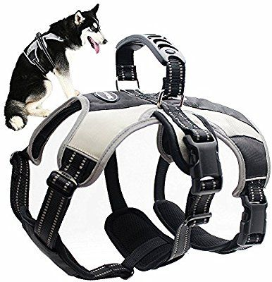 Amazon Com Mihachi Secure Dog Harness Escape Proof Reflective