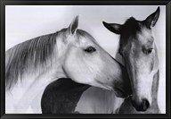 Nuzzle Fine Art Print By Van Otteren At Fulcrumgallery Com Horse Art Horse Art Print Horses
