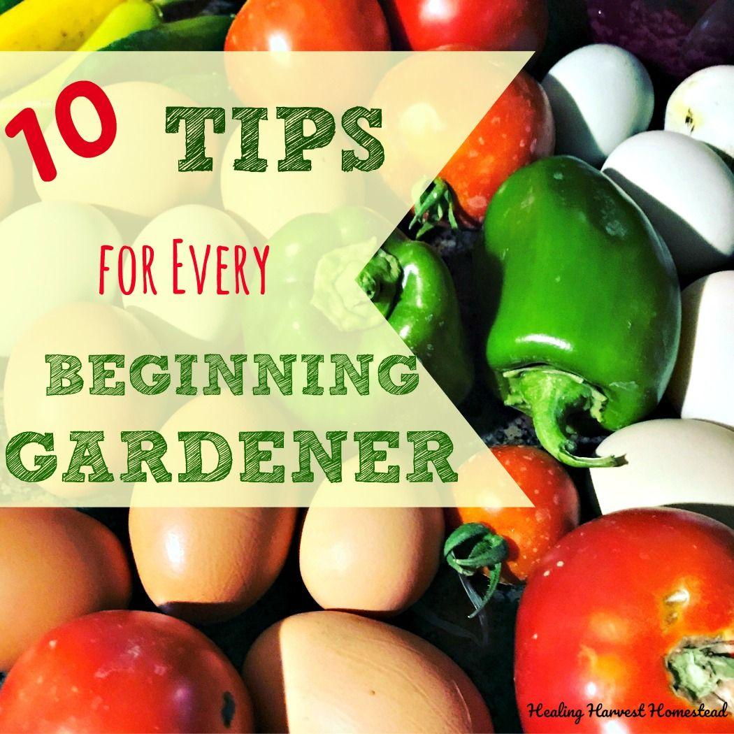 10 Tips For Vegetable Gardening Success For Beginners