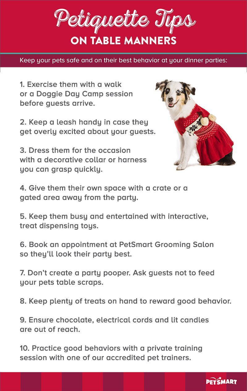 Give your dog the foundation of good behavior for the holidays ...