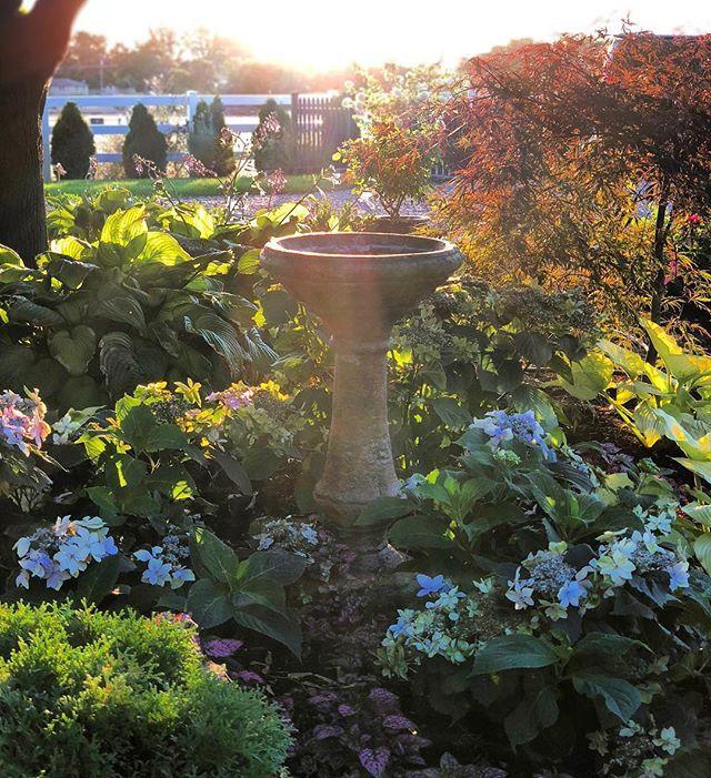 57 Amazing Beautiful Garden Ideas Inspiration And: Garden Answer (@gardenanswer) • Instagram Photos And