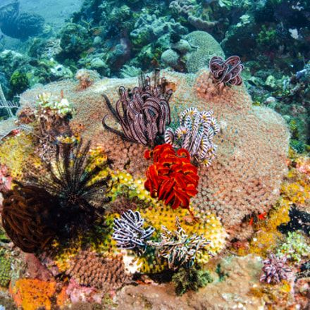 scuba - scuba #scuba #snorkeling #diving #reefs #underwater