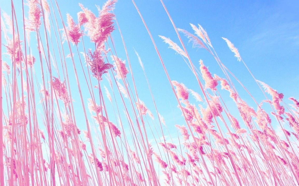 victoria secret pink wallpapers