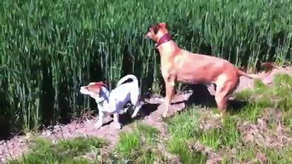 Funny Leaping Dog - WHATCH THE VIDEO HERE:  - http://FUNNYVIDEOSTUBE.CO/funny-leaping-dog/ -