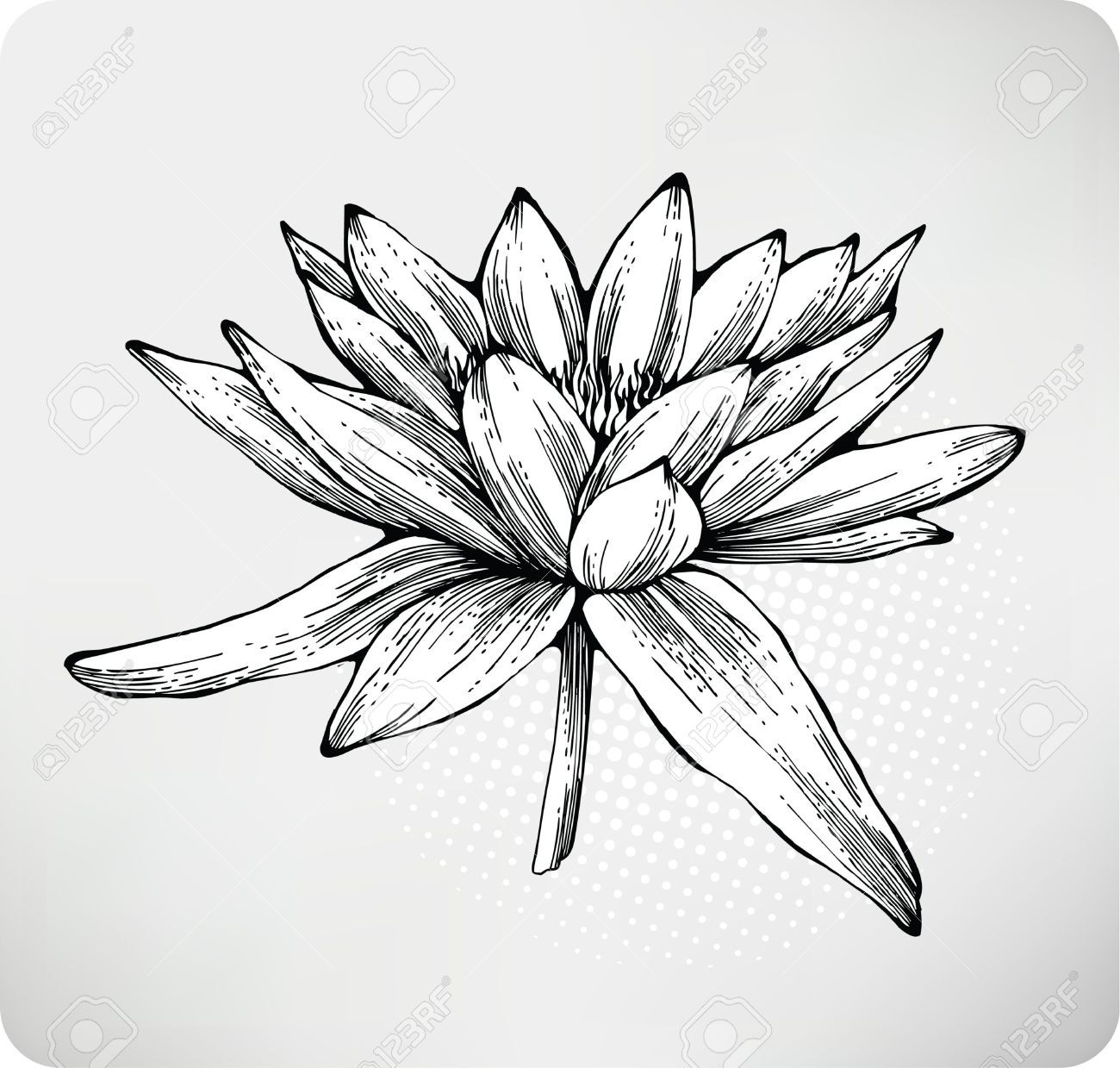 Water Lily Drawing Hledat Googlem Flowers Pinterest Drawings