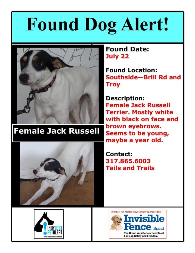 Indianapolis In Found Dog Female Jack Russell Terrier Https Www Facebook Com Indylostpetalert Posts 46321 Losing A Dog Jack Russell Terrier Jack Russell