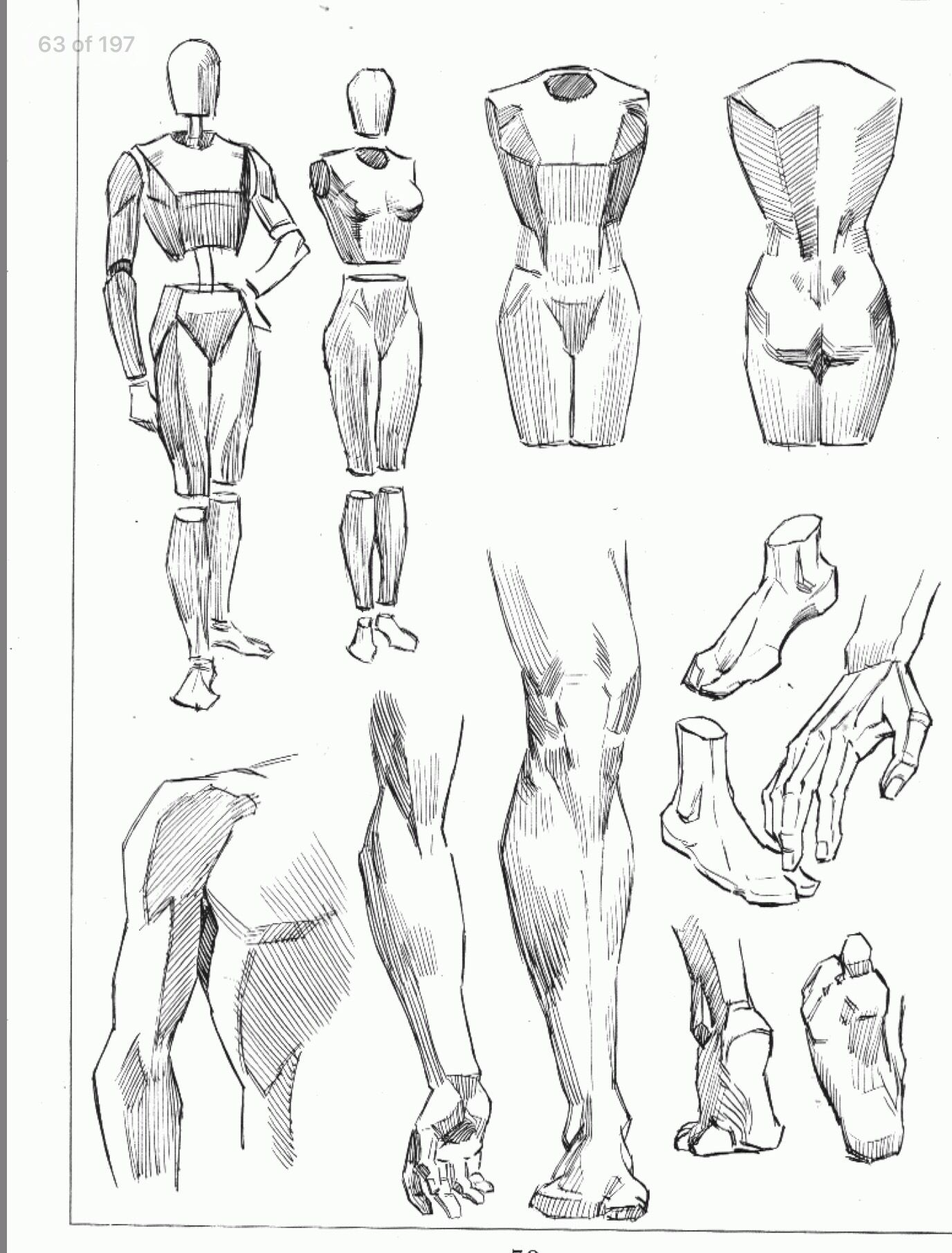 Pin by Jason Michael on drawing | Pinterest | Anatomy, Andrew loomis ...