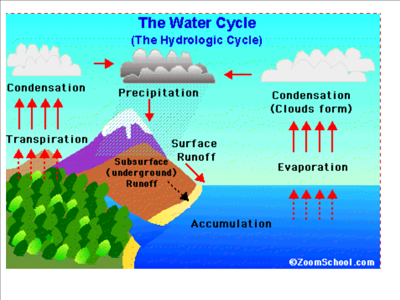 PowerPoint Interactive Notes Study Guide Quiz Water Cycle How Cycles The Movement Of Four Main Steps Condensation Evaporatio