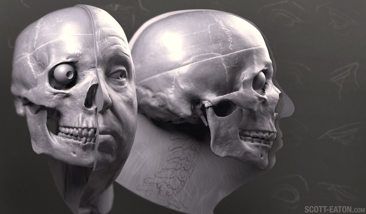 http://www.scott-eaton.com/portraiture-facial-anatomy-online-course ...