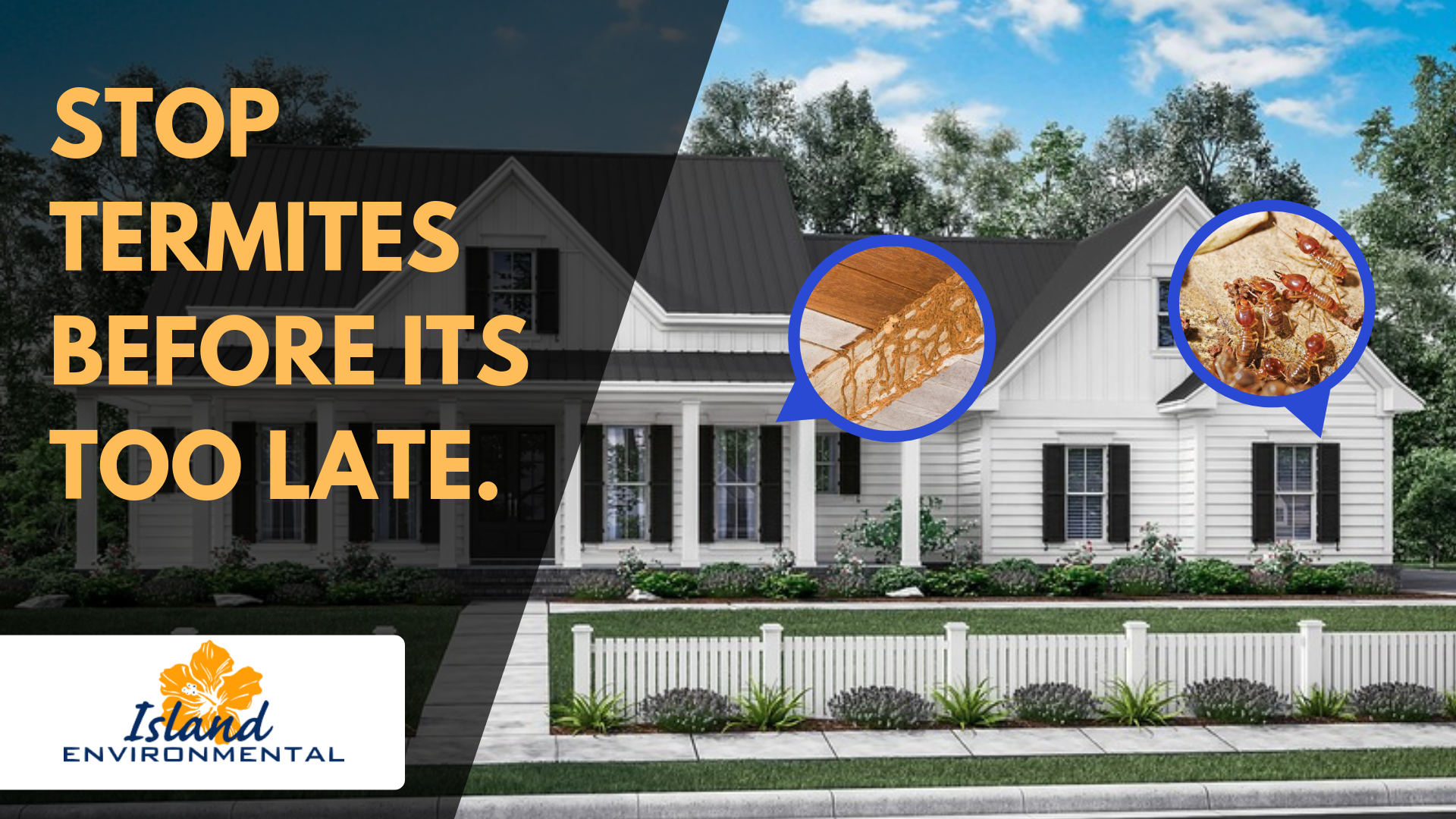 Make Your Home Free From Termites Termites Termite Inspection Termite Control