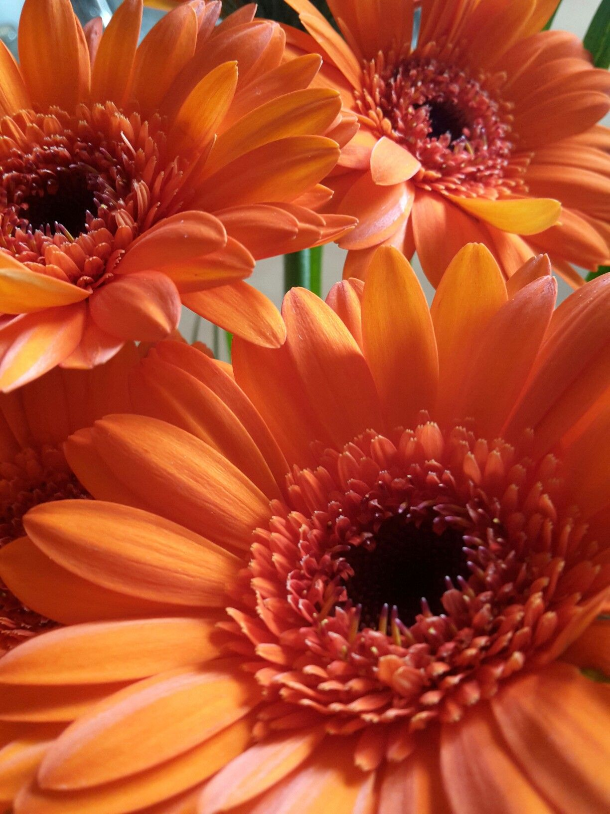 Gerbera Different Kinds Of Flowers Wonderful Flowers Flower Aesthetic
