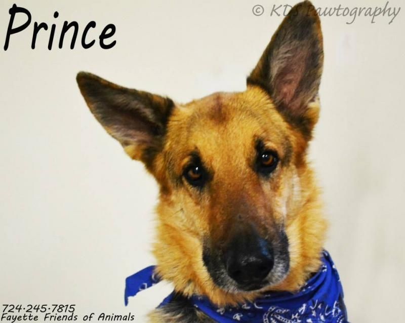Adopt Prince On Dogs For Adoption Dogs Animals German