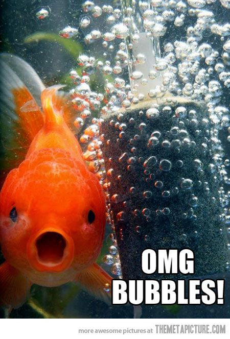 Bubbles everywhere… | Funniest EVER! | Funny animals ...