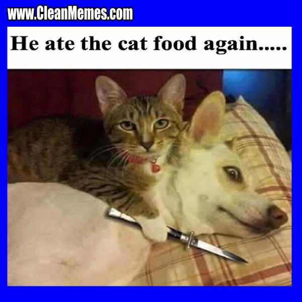 Image result for funny cat and dog memes clean