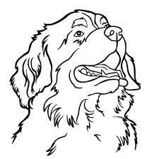 bildergebnis für bernersennen hunde motive | sennenhund, hunde, bilder
