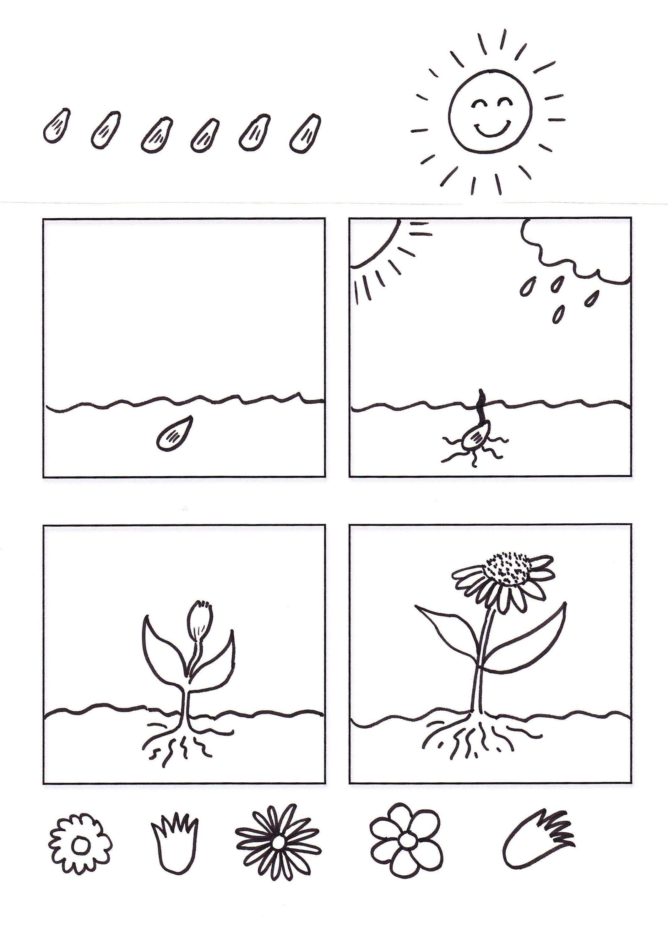 De Las Plantas Para Colorear Y Pintar Imprimir Dibujos Del Ciclo De