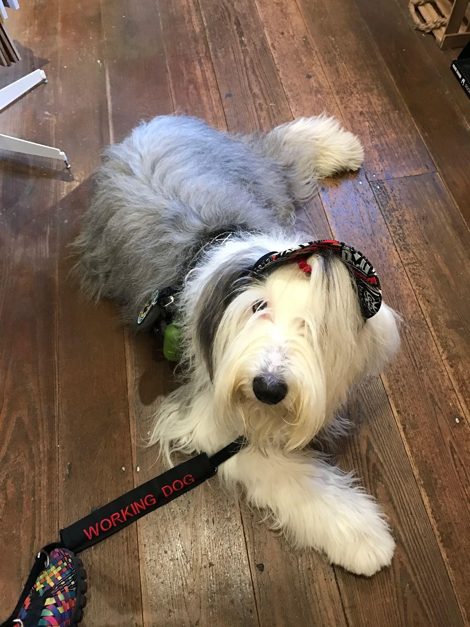 Pin On Pups