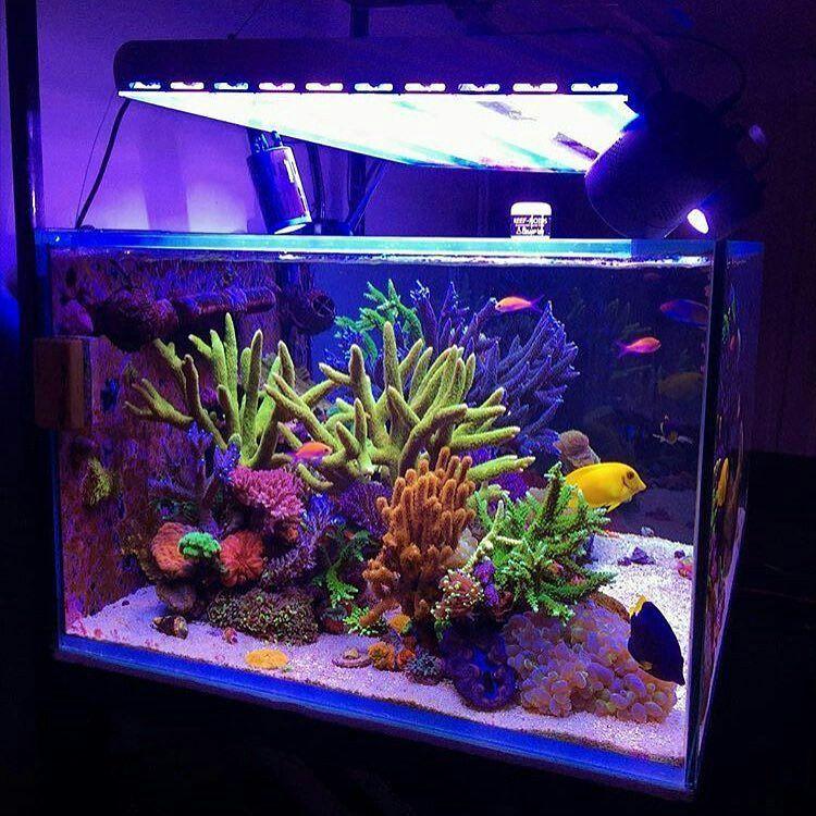 Saltwater Aquarium Aquascape: Pin By Matic Vertačnik On Aquarium