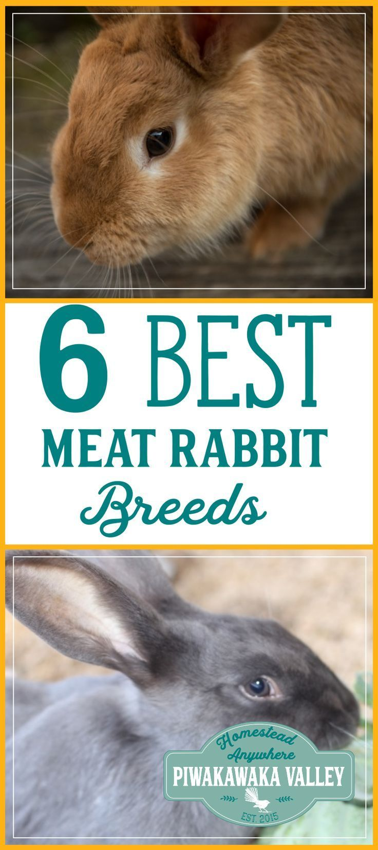 Best Rabbits for the Homestead   Meat rabbits breeds, Meat ...