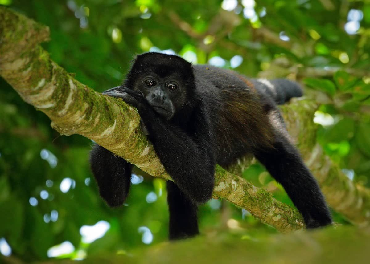 47 Amazon Rainforest Animals Ecuador S Monkeys Birds Fish