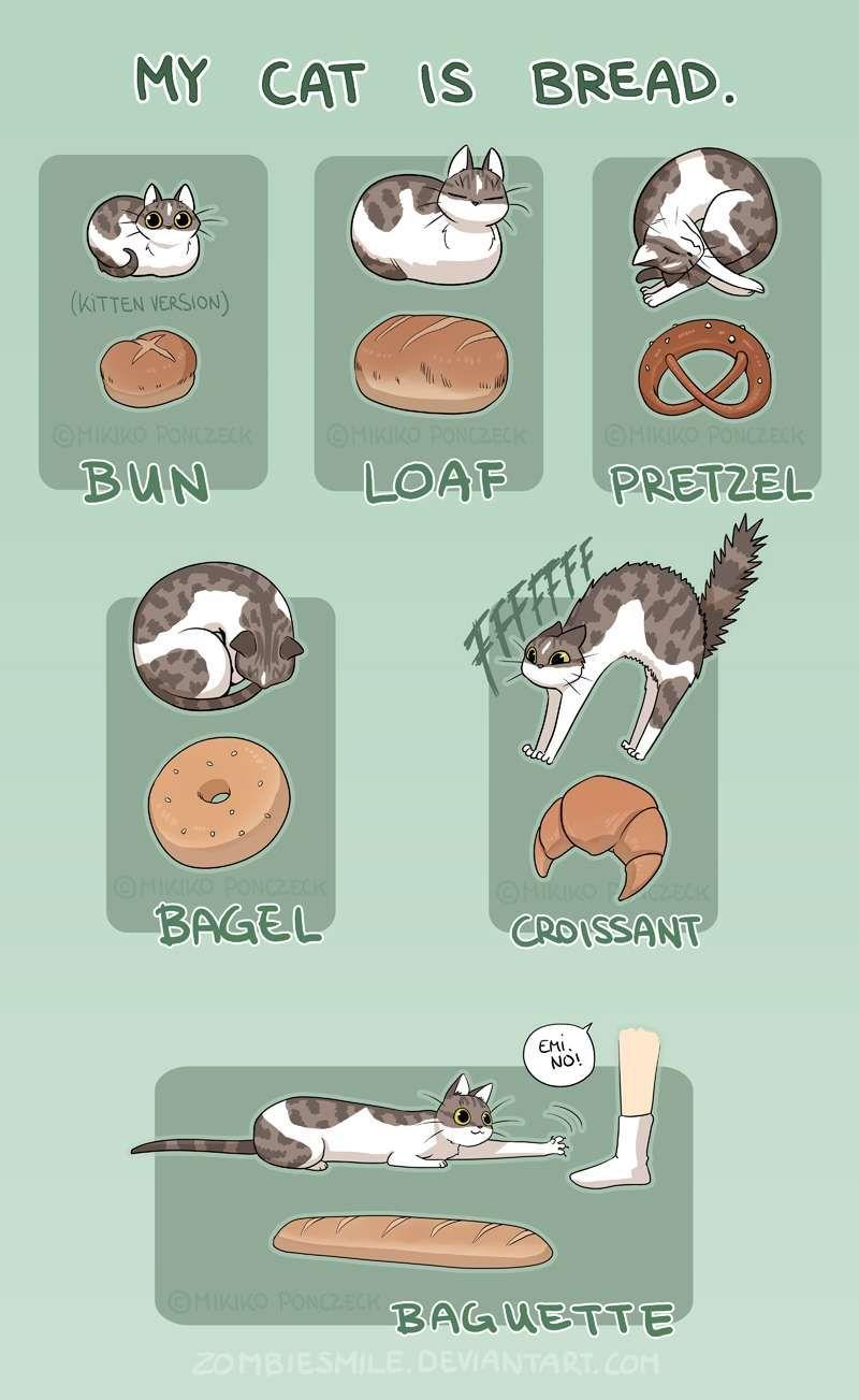 Mini Comics Cat Bread Tapastic Comics Comics Pinterest - 18 hilarious comics that are all too true for cat owners