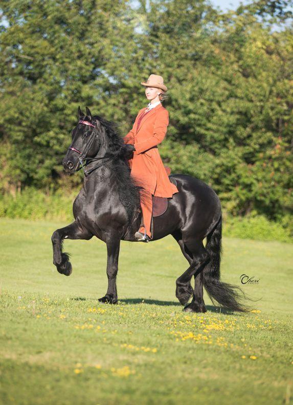 World Champion Liberty Friesian Gelding | Horses For Sale | Epona Exchange - Kobus LSI
