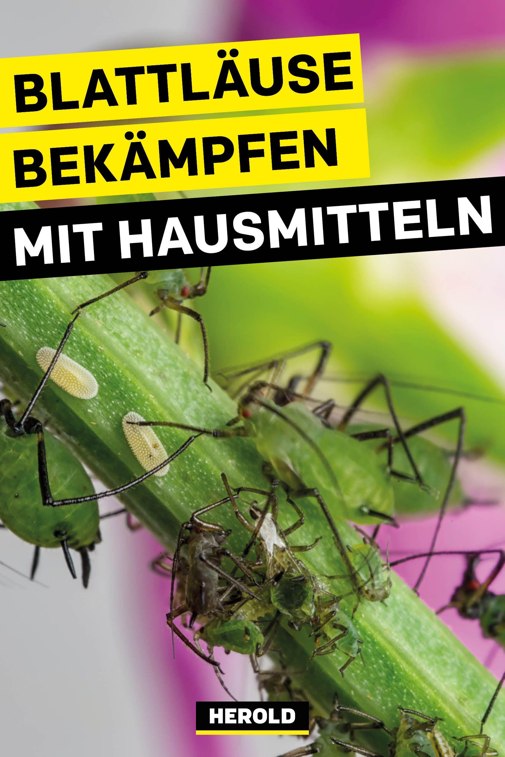 55 Schädlinge Bekämpfen Garten Haus Ideen Schädlinge Im Haus Ameisen Im Haus Was Hilft Gegen Ameisen