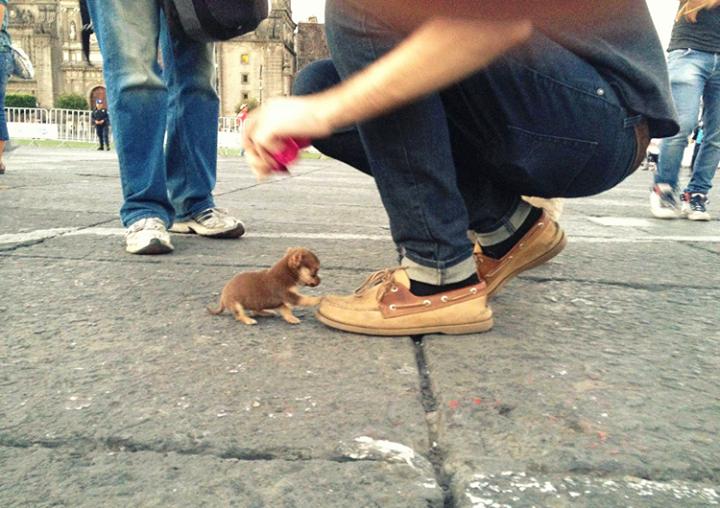 Зверское нападение собаки на человека.