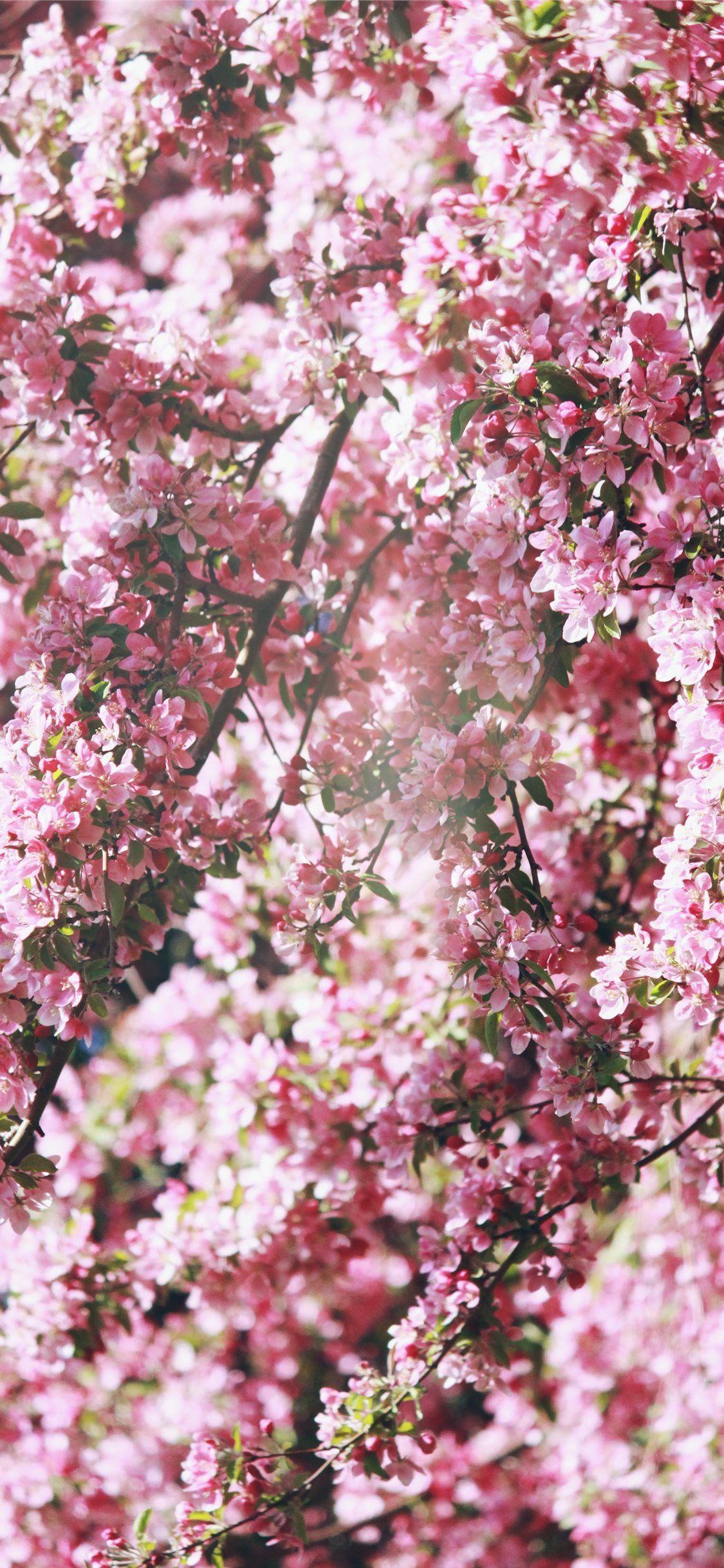 Pink Flowers Wallpaper Pink Wallpaper Nature Spring Flowers Wallpaper Pink Flowers Wallpaper
