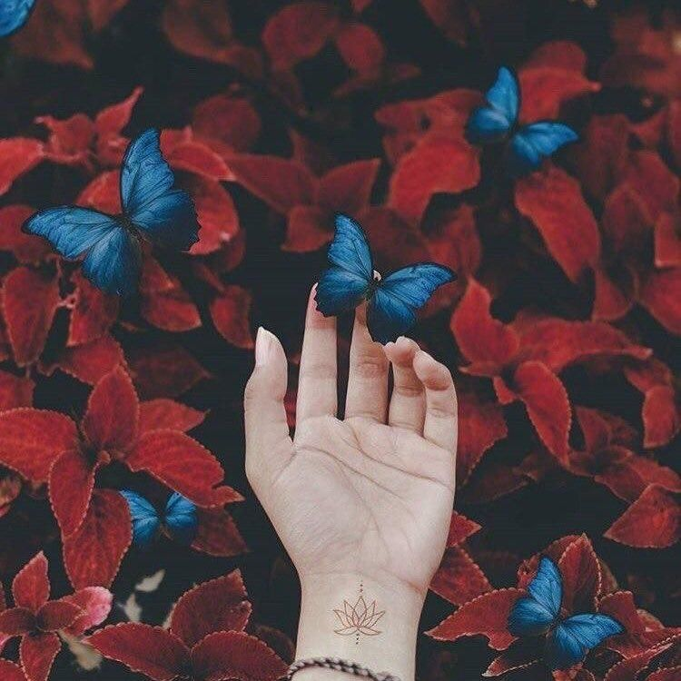 blue red butterfly aesthetic tumblr likeforfollow