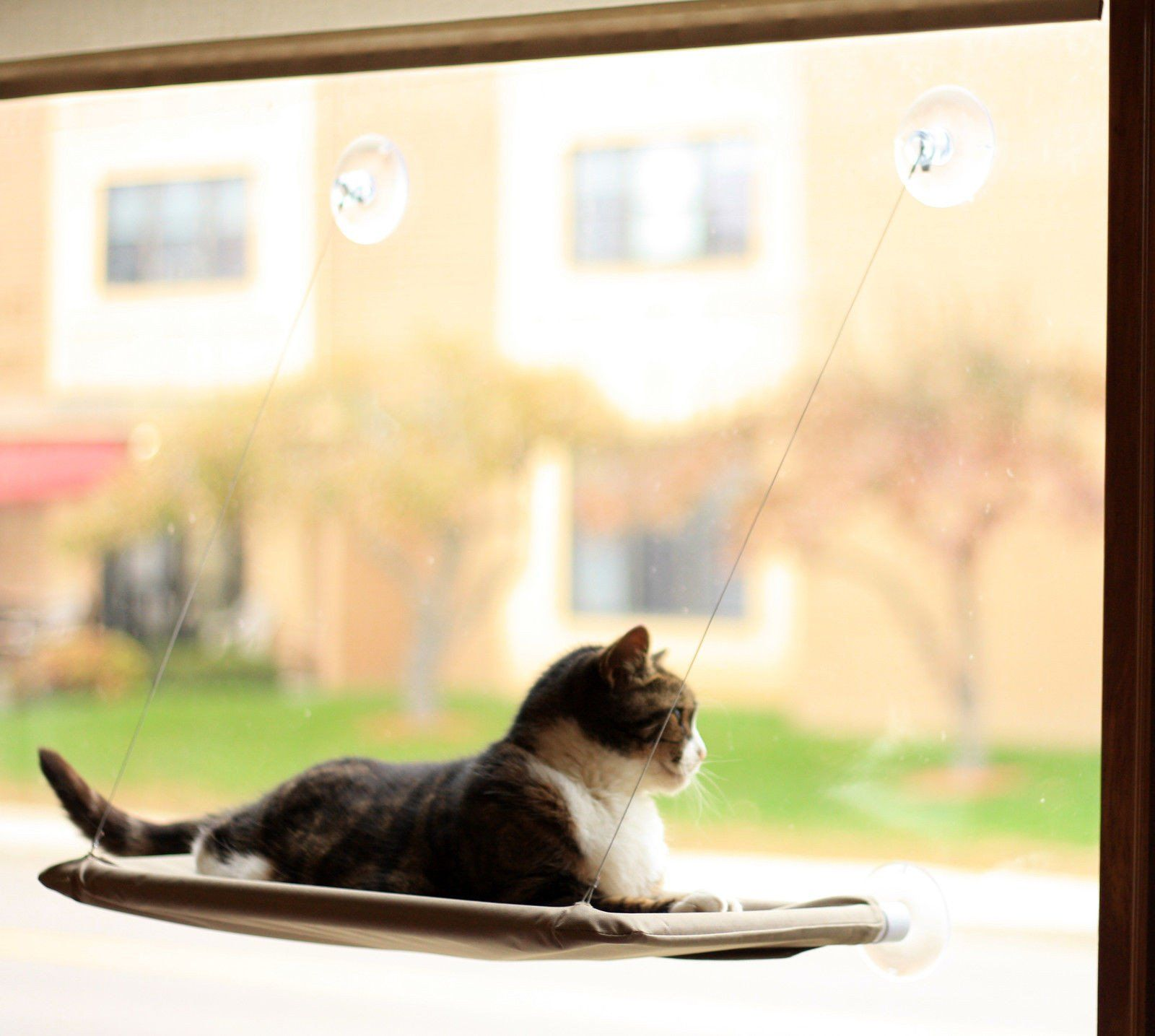 Window bed for cats  is your cat always searching for a view outside or a warm place in