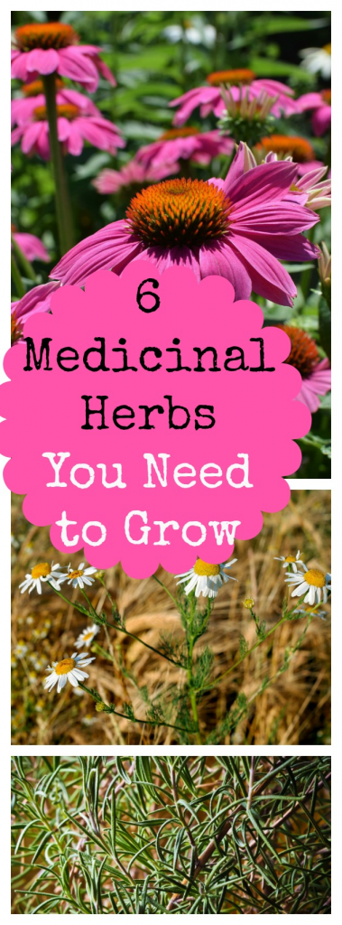 Medicinal Herbs to Grow in Your Backyard 6 Medicinal Herbs to Grow in Your Backyard » Family Growing Pains  My six favorite medicinal herbs you can grow in your herb garden. They're perfect for natural, home remedies.6 Medicinal Herbs to Grow in Your Backyard » Family Growing Pains  My six favorite medicinal herbs you can grow in your herb garden. They're perfect f...