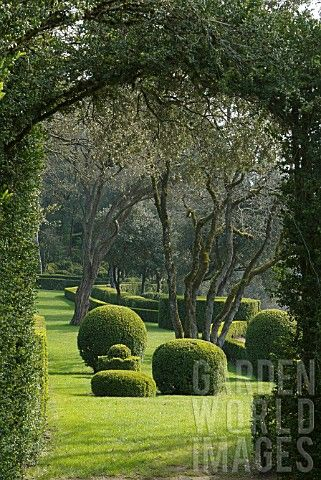 I Love Boxwood Jg Landscape Design Pinterest Gardens Topiary