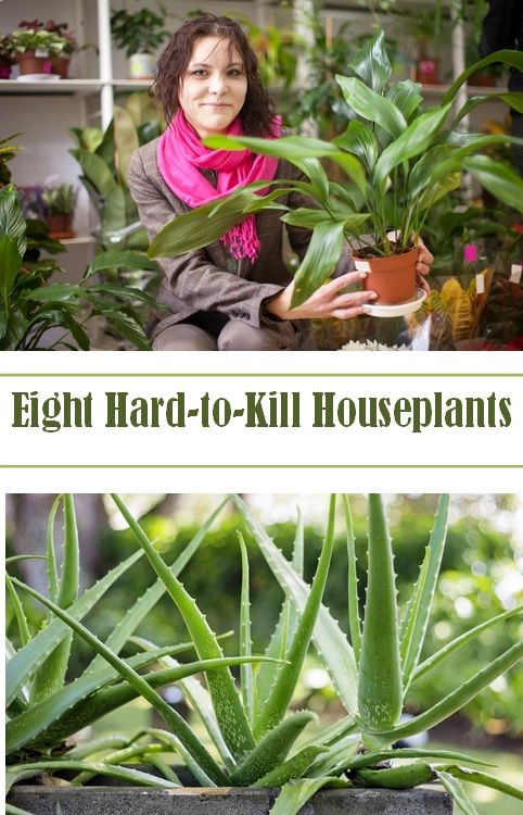 The Best House Plants Add A Lot To Life Without Adding