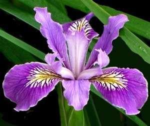 Hermosas Flores Flores Del Mundo Y Sus Nombres Buscar Con Google Plants