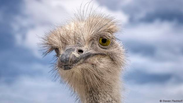 12 of the funniest animal faces Funny animal faces