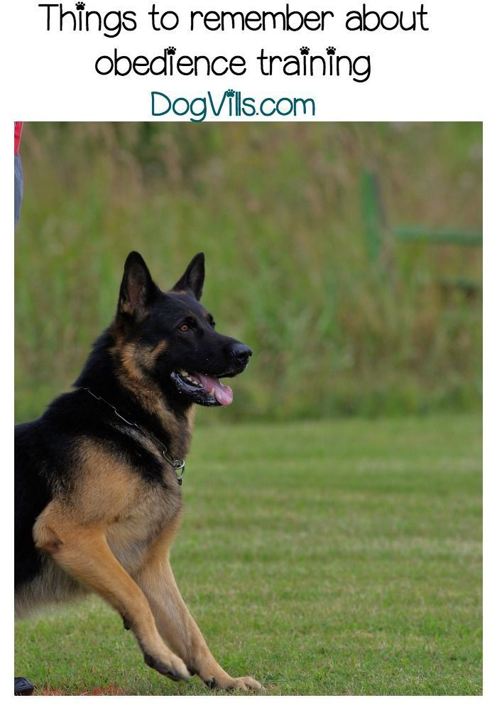Obedience Training For Dogs Dog Training Training Your Dog Dog