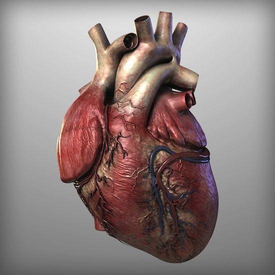 Dibujo en 3D de un corazón humano.   Med   Pinterest   Corazón ...