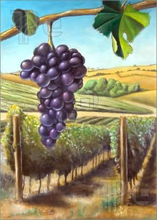 Illustration of Grape and vineyard. Suitable for wine labels. My original hand painted illustration.